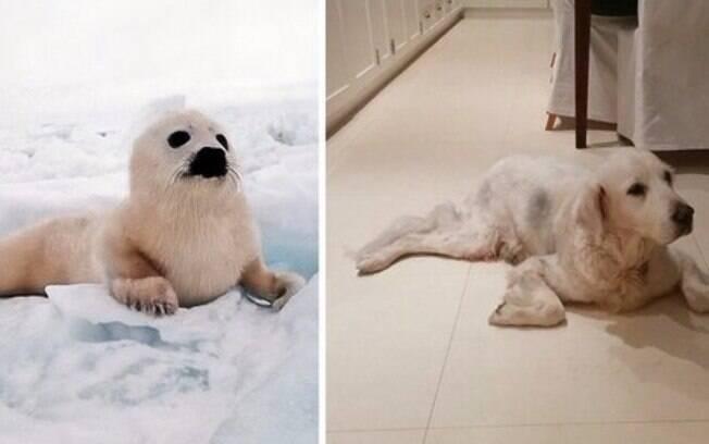 Cachorro e foca deitados.