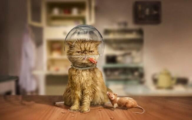 Cuidado, gato.