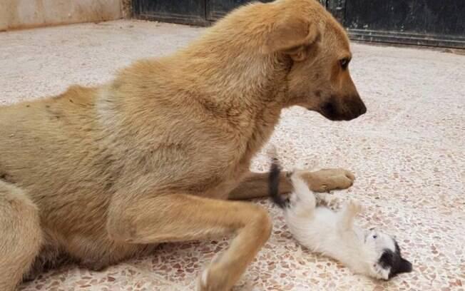 A cadela Amira adotou o gatinho Junior após passar pela tristeza de dar a luz a filhotes natimortos