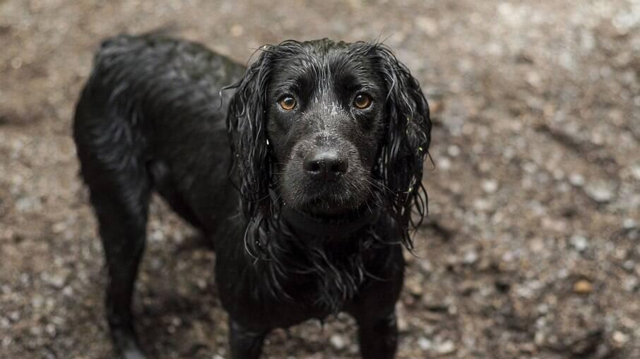 Cachorro molhado