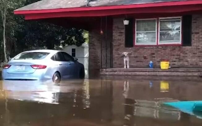 Cachorro fica ilhado em varanda de casa por causa da ação do furacão Florence