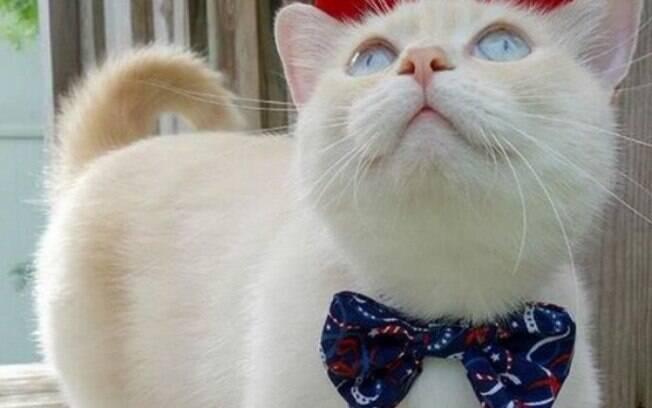 Além dos serviços, um pet shop também vende assessórios para os animais