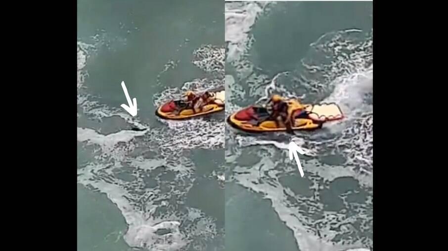 Cachorro Hulk é resgatado no mar por guarda-vidas