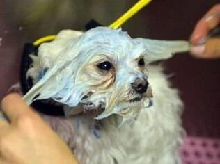 Entre outros tratamentos de beleza, cães têm escovação de dentes com pasta de sabor frango