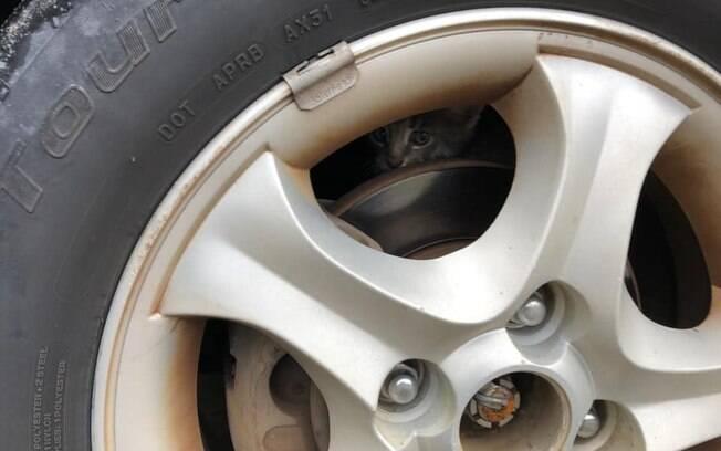 Gato em cima de pneu