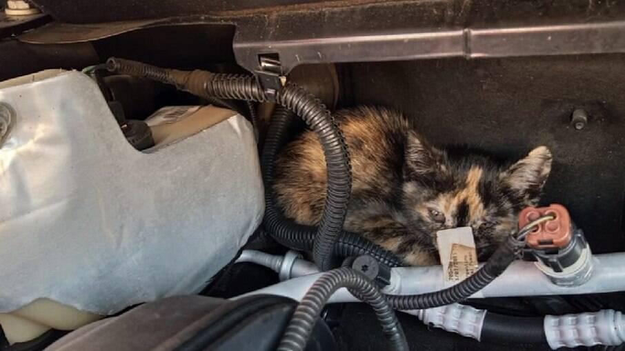 Gatos podem se esconder em carros por conta do frio