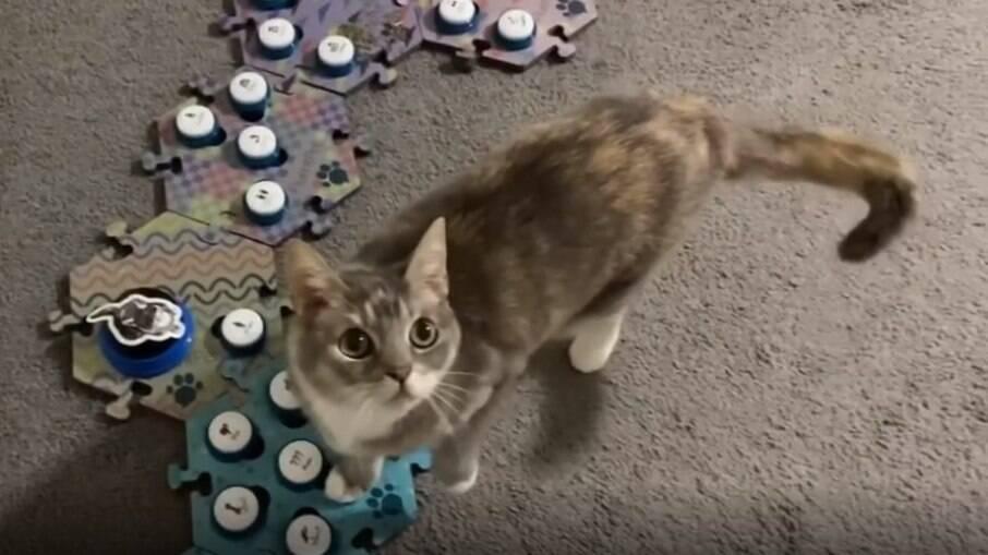 Billi, a gata mais falante da internet