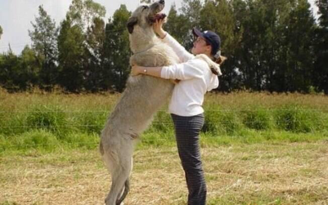 Os maiores animais do mundo vão te surpreender e você vai  ficar abismado