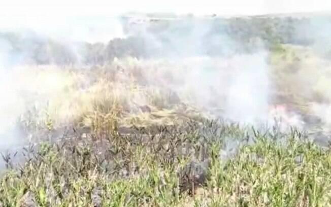 Incêndio atinge área de mata próxima ao Ceasa