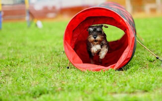 O agility para cães conta com diversos obstáculos