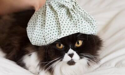 Gato pode ter gripe ou é mito? Veterinária tira suas dúvidas