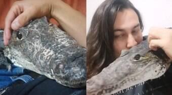 Jovem cria crocodilo como animal de estimação no México