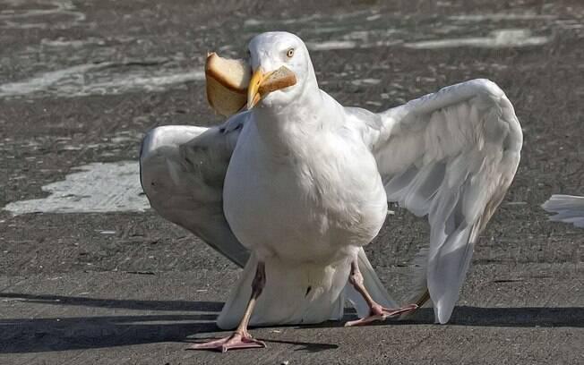 Depois de protagonizar a cômica cena, a gaivota se deu bem e conseguiu comer o pão antes preso ao seu bico