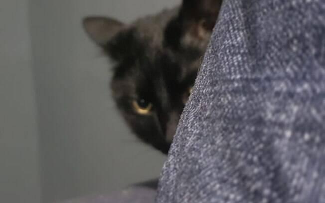 Redobre a atenção com o seu gato