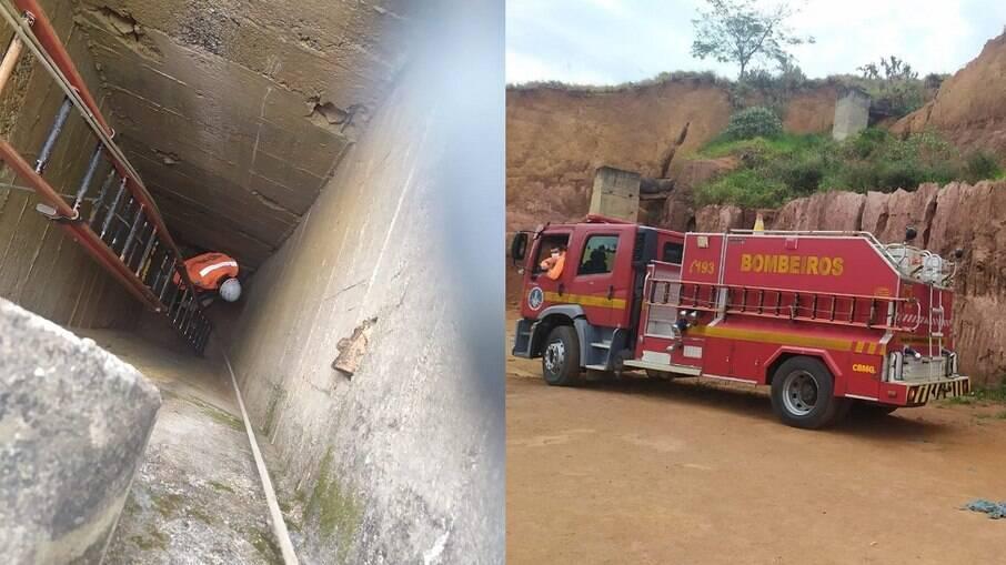 Cachorro é resgatado após queda de quase 12 metros de altura