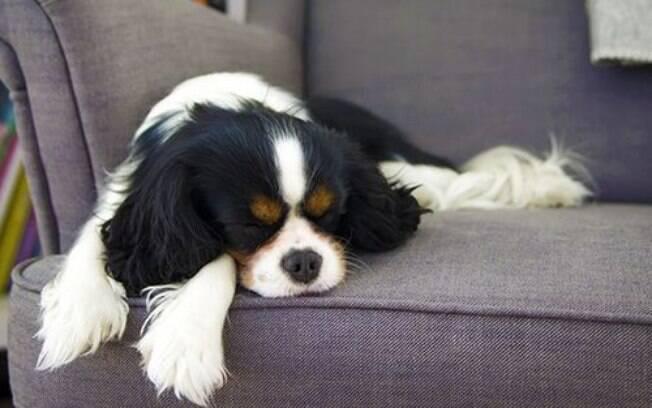 Cheiro de cachorro é difícil de lidar, mas em alguns passos pode ficar fácil