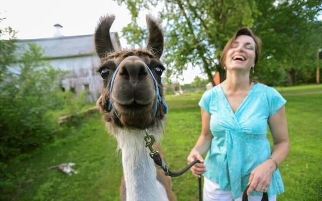 Susan Morgan com Lord Greystone, a miniatura de lhama, em sua fazenda em Hastings, Minnessota