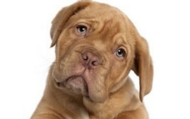 Podem haver muitas explicações para um cachorro chorando