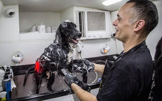 Cachorro em situação de rua tomando banho fornecido por apoiadores do projeto