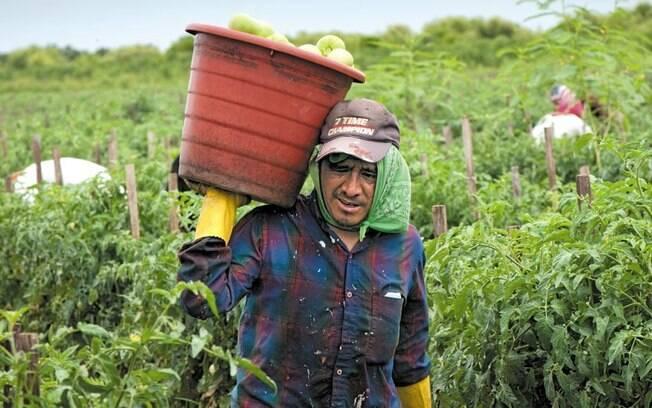 Migrante da Guatemala em colheita de tomates na Flórida