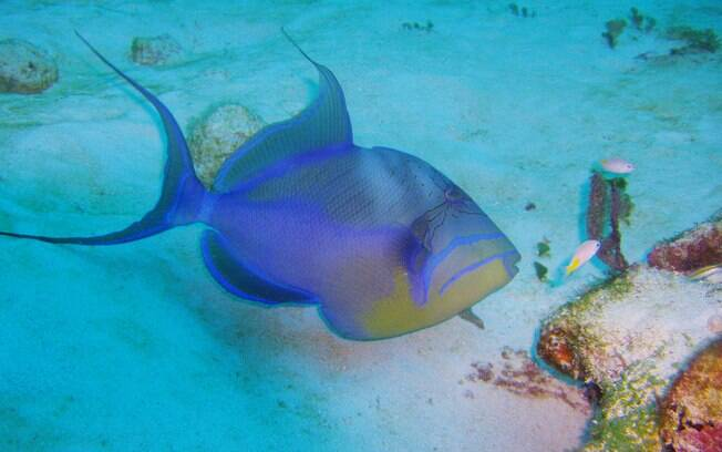 Great Barrier Reef Marine Park, na Austrália