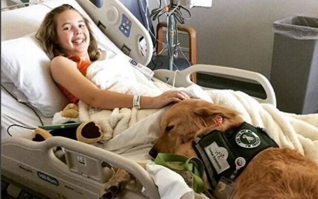 A terapia assistida por animais é um método fundamental para o tratamento de pacientes em hospitais
