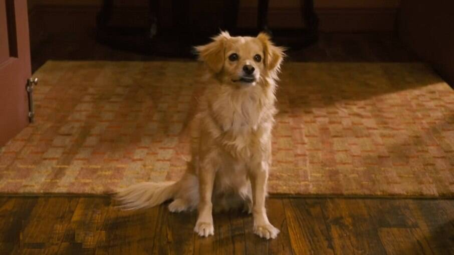 Cão da raça Kokoni no filme