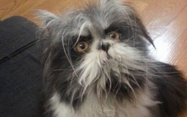 A imagem que despertou a dúvida, é gato ou cachorro?