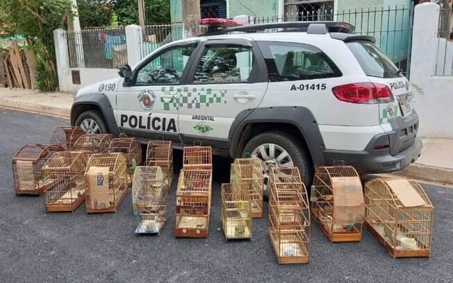 Polícia ambiental apreende pássaros em Santo Antônio de Posse