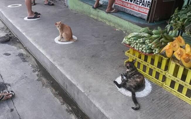 Gatos em círculo