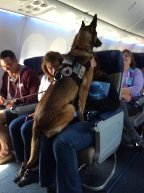 Animais são flagrados em fotos bem engraçadas durante viagem de avião