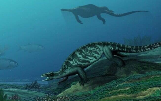 A nova espécie de tartaruga pode ajudar especialistas a desvendar os mistérios da evolução da classe