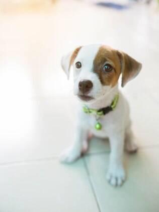 O cachorro faz xixi de excitação ou de medo