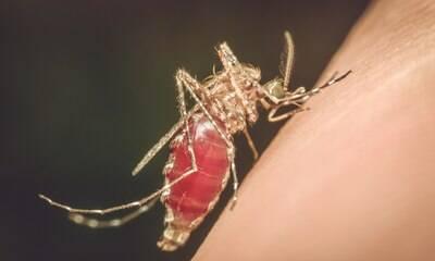 Tratamento para malária pode funcionar contra Covid-19