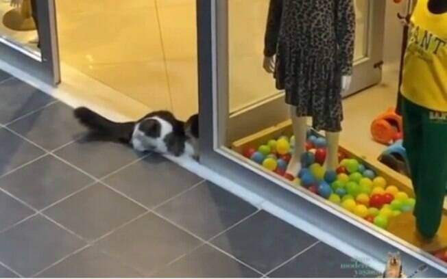 Gato entretido com bolinhas coloridas