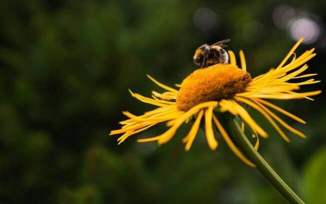 Veja as diversas simbologias das abelhas