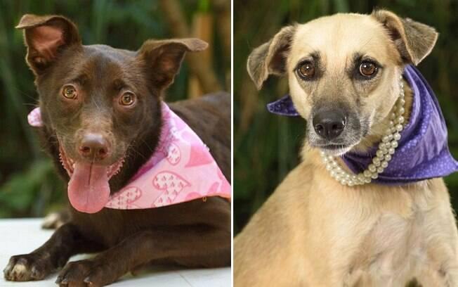 Esses são alguns dos cães que estarão disponíveis nas feiras de adoção