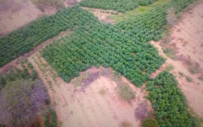 Vista de cima, plantação fica ainda mais impressionante