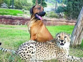 Parceria. Relação de amizade entre animais pode ser observada em características como mutualidade e interação