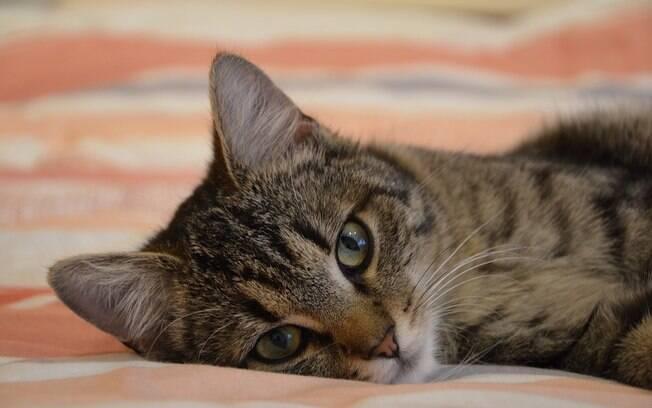É muito difícil identificar um gato com febre
