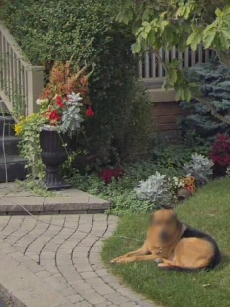 cachorro com o rosto borrado na grama