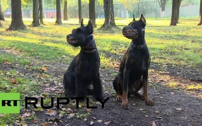 Cachorros usando focinheira