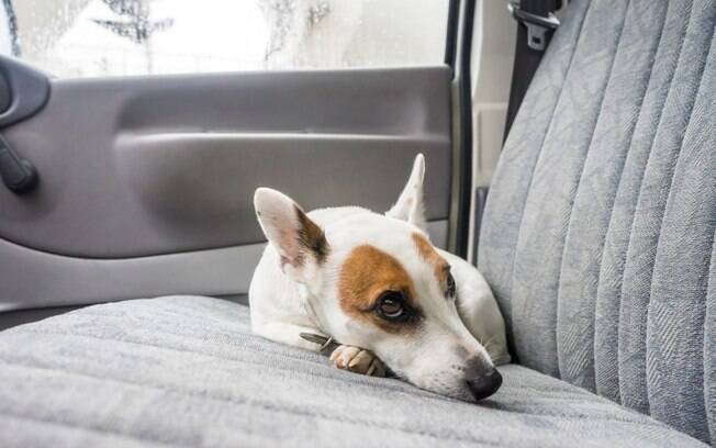 Informe o motorista que deseja transportar um animal para saber se ele aceita