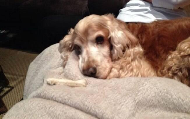 Ossos para cães podem prejudicar a saúde deles?
