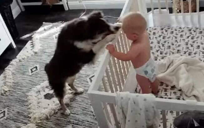 Cachorro e bebê