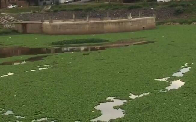 Calor e poluio cobrem lagoa de Hortolndia de aguaps