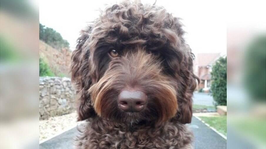 Digby é um cachorro de terapia usado por bombeiros