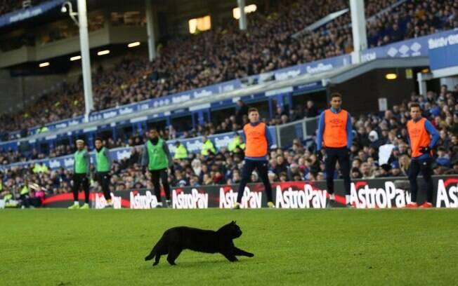 Gato preto que invadiu o jogo de futebol