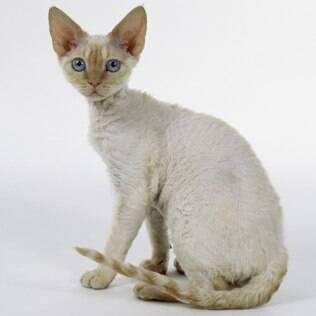 Sphynx Cat For Sale Richmond Va