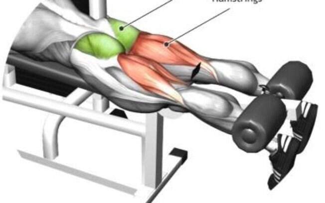 Músculos acionados na mesa flexora
